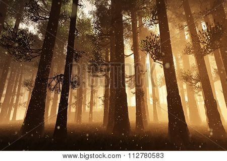 Mysterious Fairy Tale Deep Magic Forest