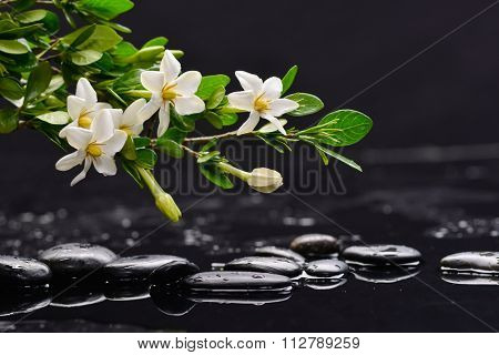 Set of branch gardenia flower on pebbles
