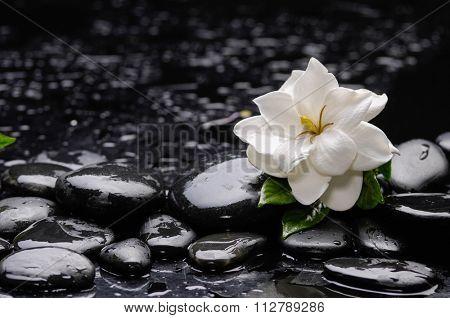 Still life with gardenia flower on pebbles