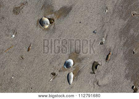Texas beach sand and shells