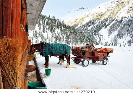 Horse in mountain stable