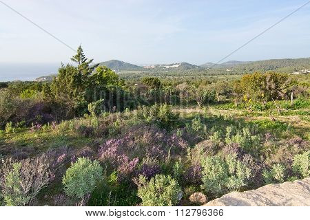 Ibiza Heather Landscape