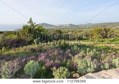 Ibiza Heather Landscape