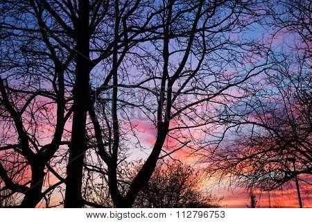 Very bright and beautiful sunset on the background of cobweb of tree branches