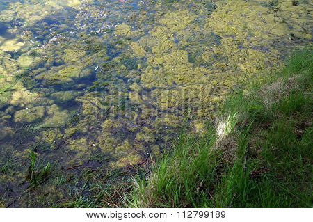Algae on a Small Lake