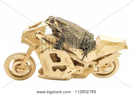 Common Toad  On Motorcycle Model