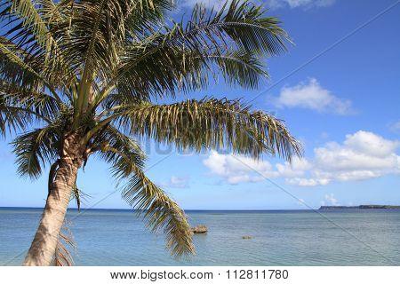 Palm tree and the sea in Guam Micronesia