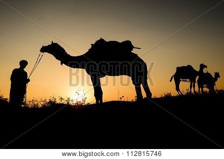 Silhouette of the Camel Trader crossing the sand dune during sunset