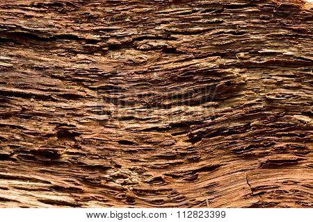 Pine Bark Background Interior Side