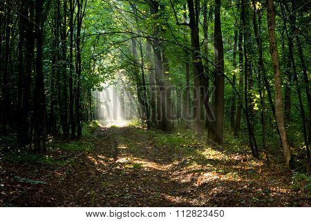 Sunbeams In Morning Misty Forest