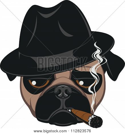 Funny pug with cigar