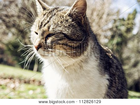 Portrait Of Domestic Cat, Animal Theme
