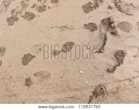 Footprints In The Wet Ground