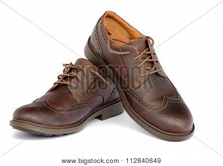 Brown Brogue isolated on a white background