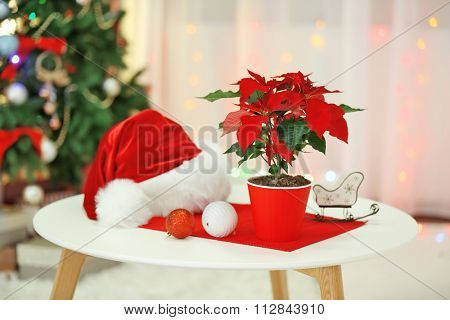 Christmas flower poinsettia on holiday interior background