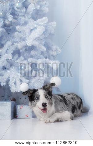 Border collie dog lying down on white Christmas lights