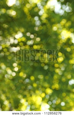 Green Background Of Grass