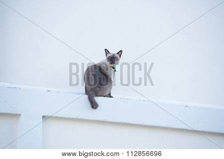Roan Cat On The Wall.
