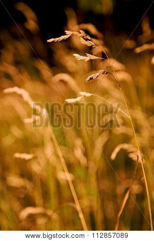 A Close-up Of A Single Sharp Straw Of Grass Among Blurred Straws On A Black Background.