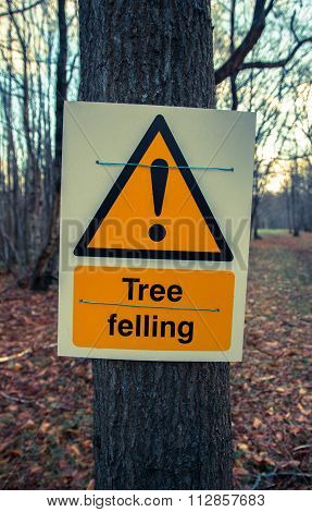 Sign danger tree felling on tree in forest