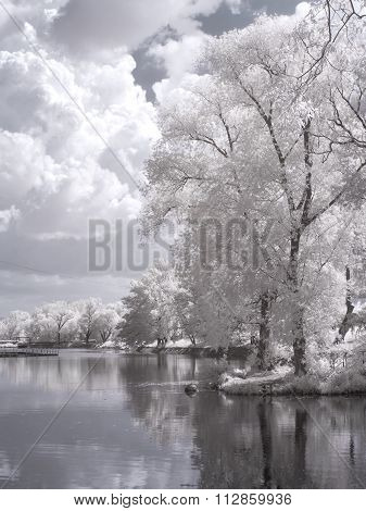 On Territory Of The Exhibition Complex. Infrared Photography