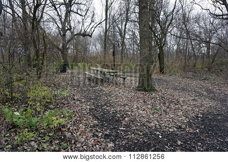Picnic Table in the Hammel Woods