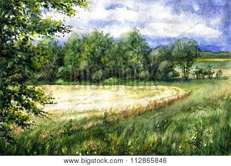 Summer View Of The Wheat Field.