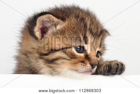 Small sad kitten looking surprised. Isolated on white background. Studio shot.
