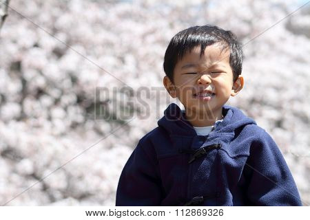 Japanese boy and cherry blossoms (2 years old)