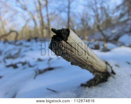Burnt stick in snow