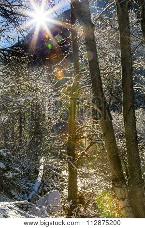 Winter Leaves Snow Ice Sun Wenatchee River Valley Leavenworth Washington