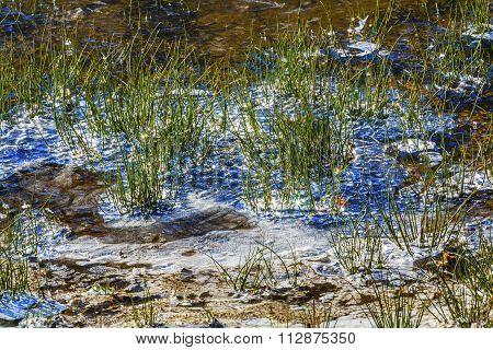 Wenatchee Diamonds Sparkles Winter Leaves Snow Ice  Wenatchee River Valley Leavenworth Washington