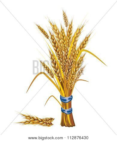 Vector Paddy Grass Closeup Illustration
