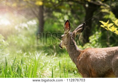 a cute deer grazing in a local park with the sun shining through a meadow