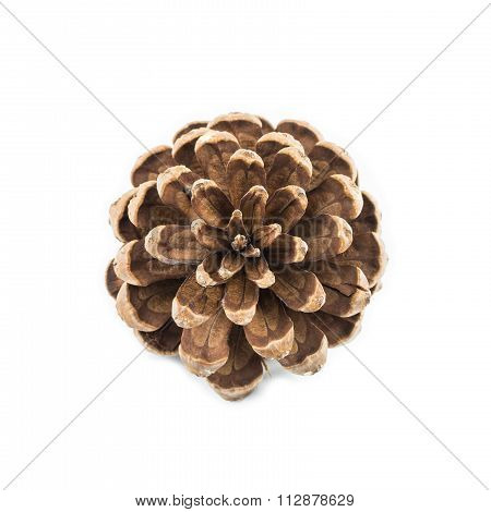Pine Seed On White Table