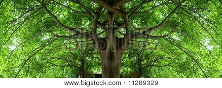 Shady Place Under Big Tree