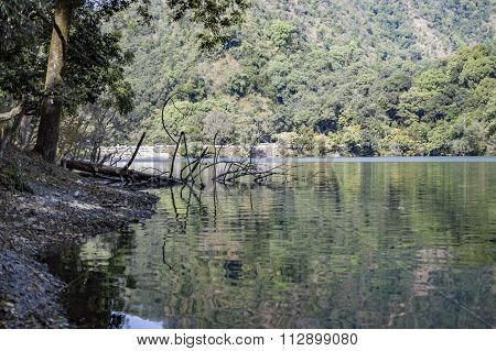 Branches Of Tree In Water Of Lake