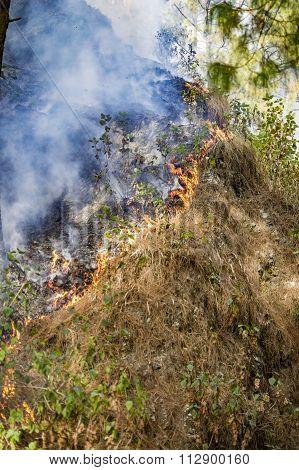 Wildfire And Smoke Burning Grass