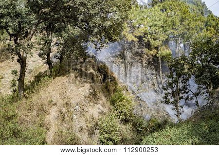 Smoke Filled Forest In Hills
