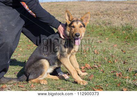keep German shepherd