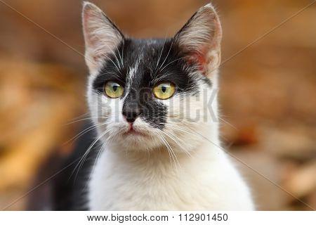 Cute Mottled Cat