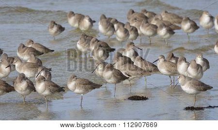 Seagulls Sunning