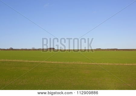 Winter Wheat Fields And Meadows