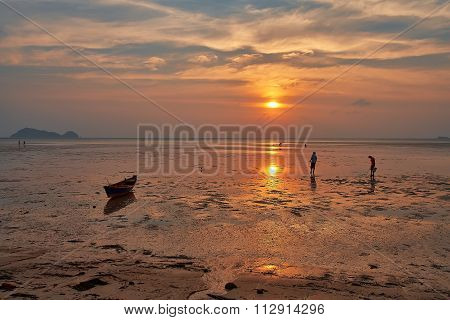 people collect shells after ebb in the ocean