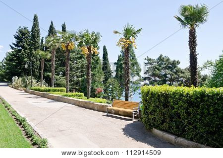 Alley With Palm Trees In The Park In Partenit