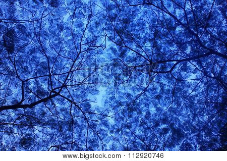 Tree Leaves Abstract