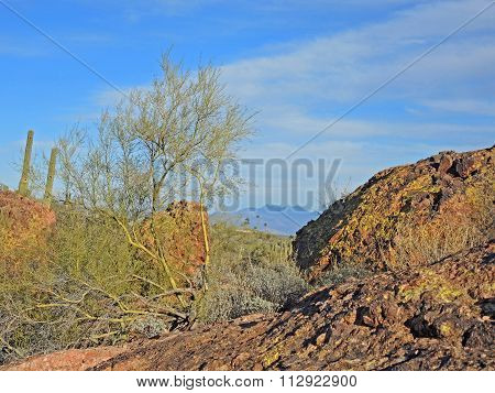 The rugged boulder strewn terrain in Fountain HIlls Desert Botanical Garden is replete with Saguaro and Cholla Cacti Palo Verde trees and many other varieties of plants even in winter. And the trail offers many enchanting scenic views. rough rugged uneven
