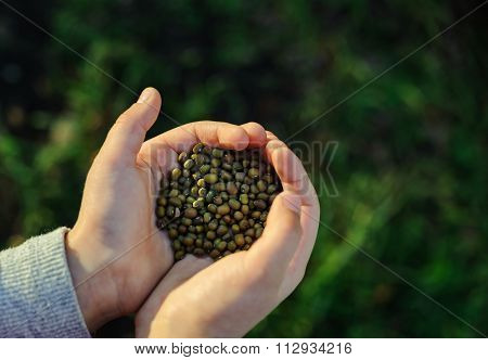 Children's Hands Holding Seeds.