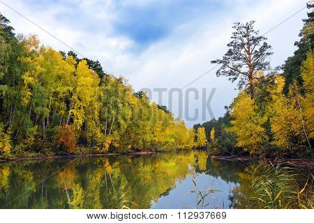 Autumn Landscape With Yellow Birches On The River