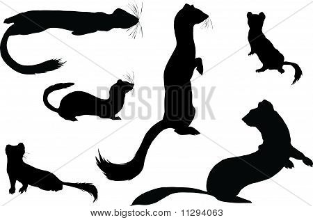Silhouettes of ermines